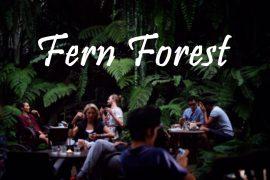 fern-forest
