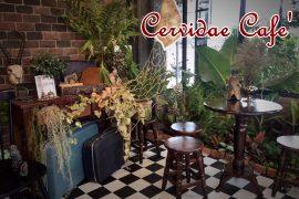 Cervidae Cafe'2