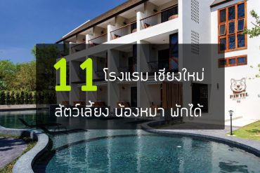 pet-friendly-hotel-chiang-mai